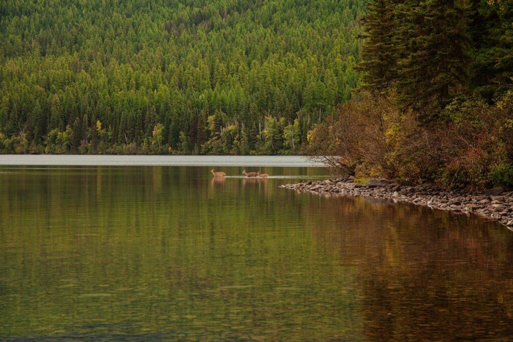 Parki narodowe w USA - dzikie zwierzęta