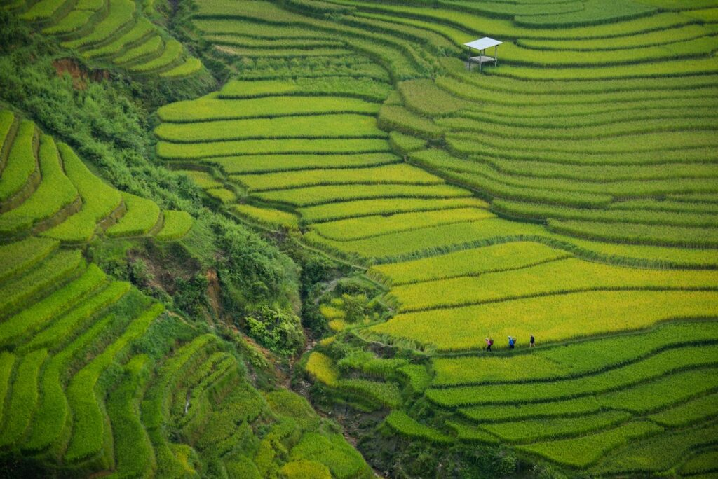 Promesa wizowa do Wietnamu
